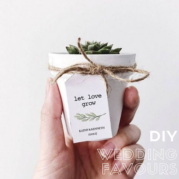 diy wedding favours succulents geelong w