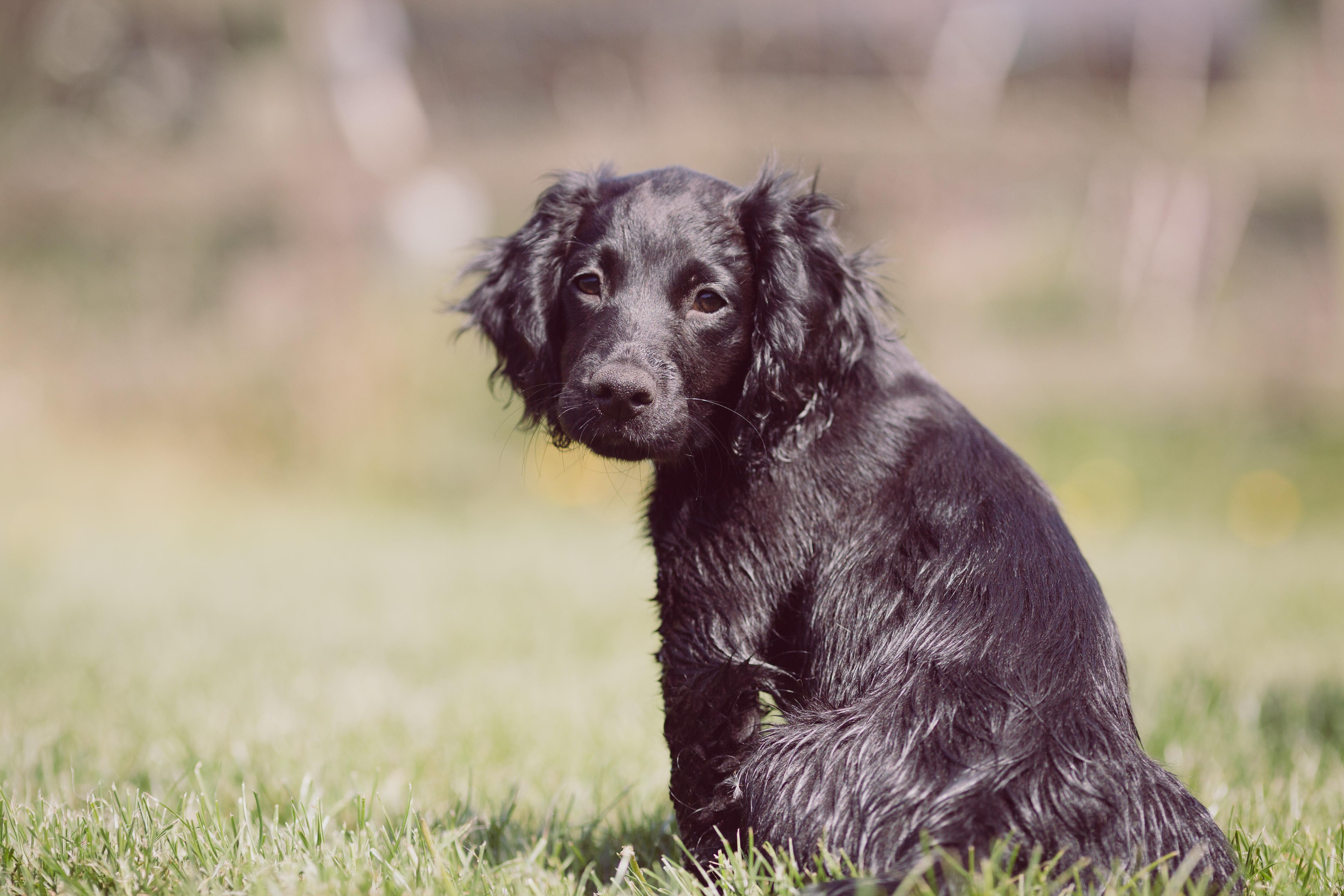 Puppy Training Session