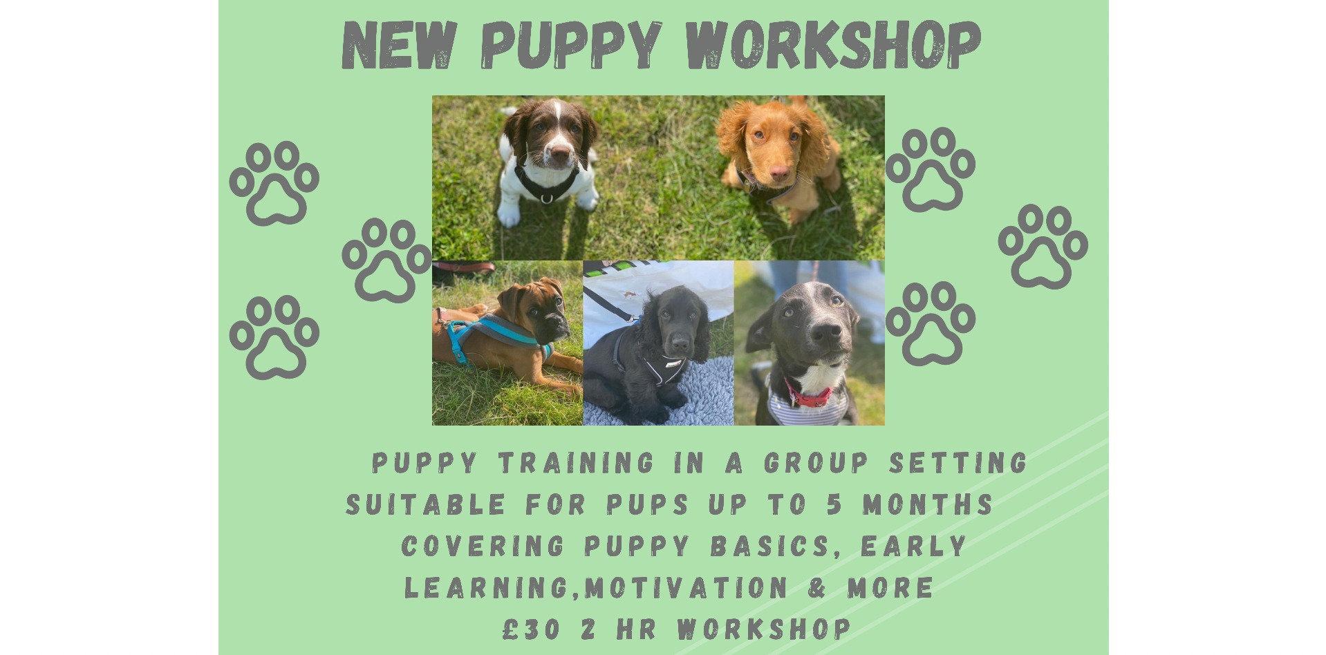 Puppy Workshop ( 2hrs long)