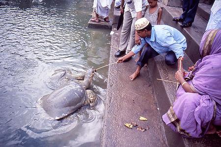 Tempel-Teich-Modifizierung-in-Südasien_P
