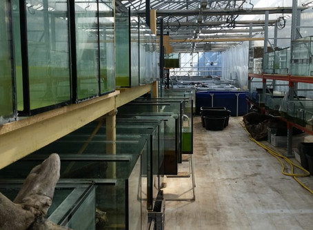 First turtles moving into new greenhouse