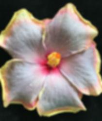 Billieʻs Beauty 30-17.jpg