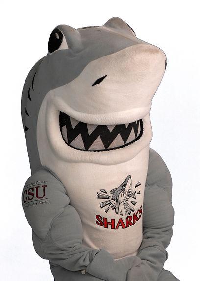 shark-white-bg.jpg
