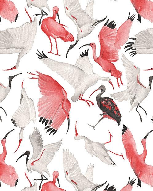 Annie Moran - Scarlet & White Ibises