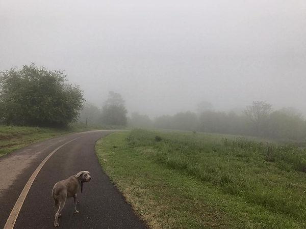 Misty Moors.jpg