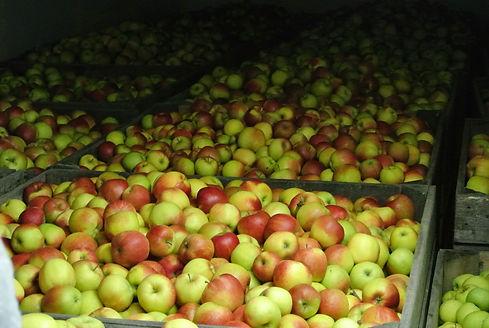 Fruitbedrijf Beck