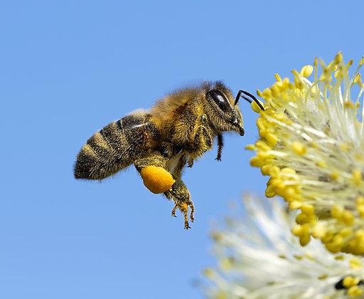 Wir gegen Bienensterben - Arbeiterin