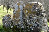 All About Lichen