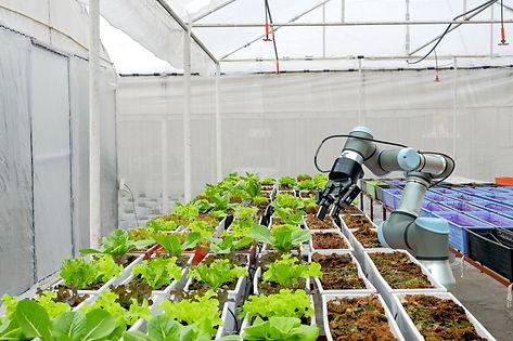 Modern organic farmhouse adopts the tech