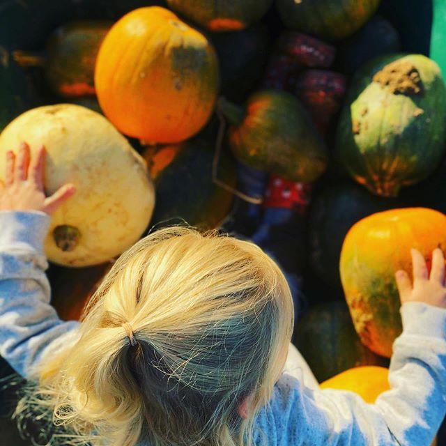 Pumpkin Picking 2021!