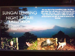 Night Safari (RM35/ PAX)