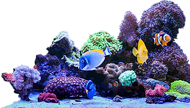 cropped_coral_scene-816x464_1__edited.pn