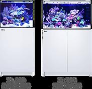 Red Sea Aquarium.png