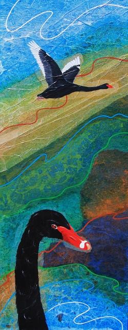 Wetland series- Black Swan