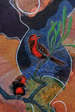 Painted Firetails on Mulga detail