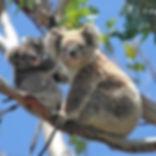 101 things to do in Australia, Will Jone