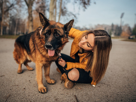 Degenerative Myelopathie (DM) beim Hund
