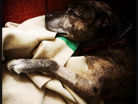 Cauda-equina-Syndrom beim Hund
