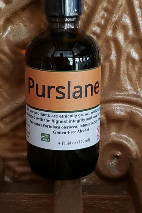 Purslane Tincture