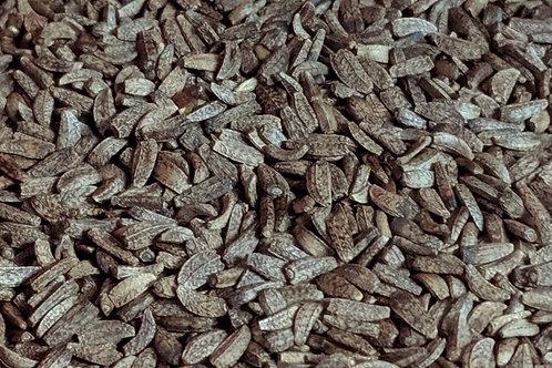 Burdock Seed (Dried)