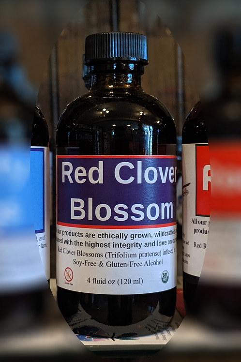 Red Clover Blossom Tincture
