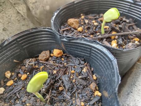 植物とBodyTalk2