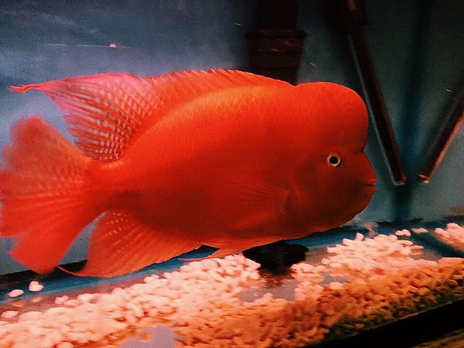 aquarium lucky fish 1000 aquarium ideas. Black Bedroom Furniture Sets. Home Design Ideas