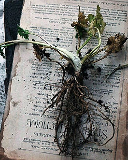 Trust your roots. #sundaymood.jpg