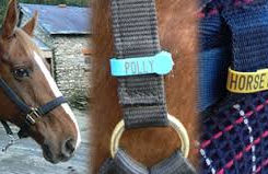 horse tack.jpeg