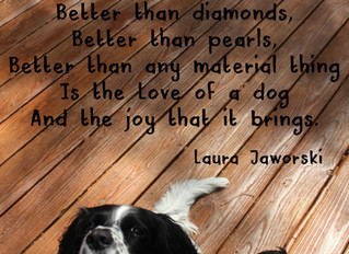 Love of a Dog ♥