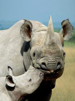 Rhino Mama & Baby