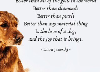 Dogs ♥