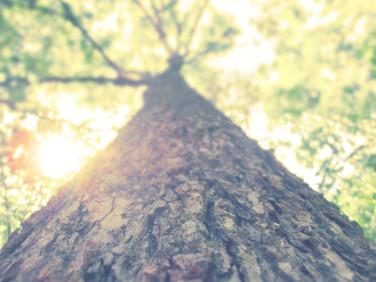 Trees ♥