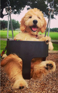 Give me a push?