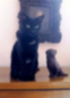 Charlotte de Mouzon, Ethologue, Comportementaliste pour chats, spécialiste en comportement du chat, comportement chat, chat, chaton, Bordeaux, Gironde