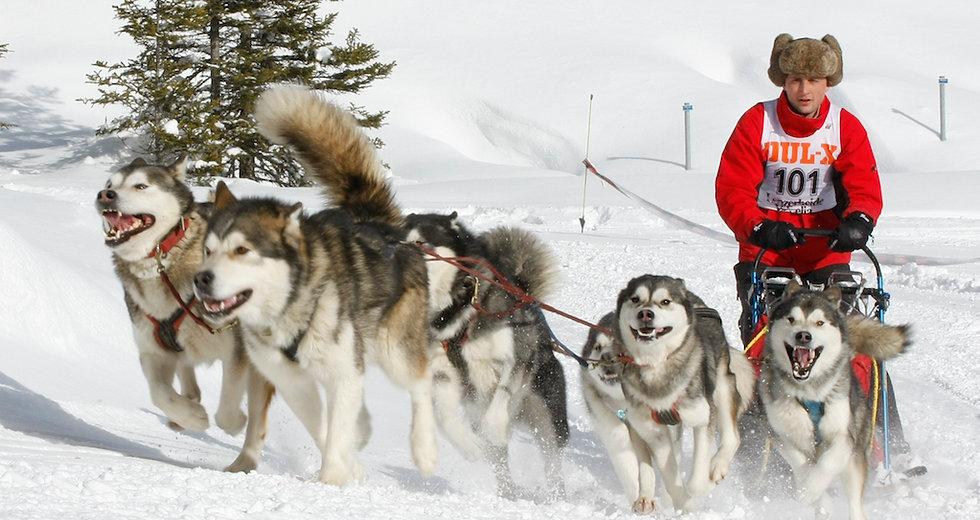 Cagliatscha's Alaskan Malamutes