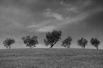 trees-790220_1920.jpg
