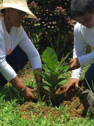 tree planting 8.jpg