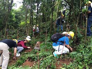 tree planting 4.jpg