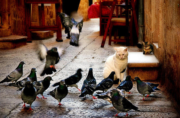 Cat amongst the pigeons.