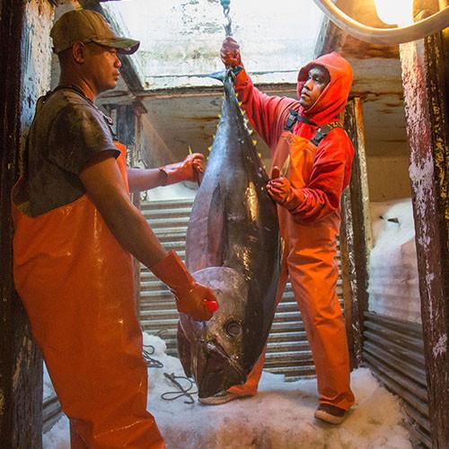 Hawaiian Fresh Seafood Tuna Offloaded In Honolulu
