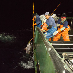Hawaiian Ahi Tuna From Boat to Table
