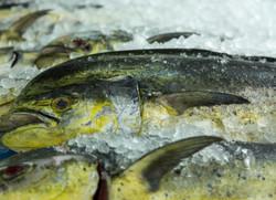 Wholesale Fresh Mahi Dolphinfish