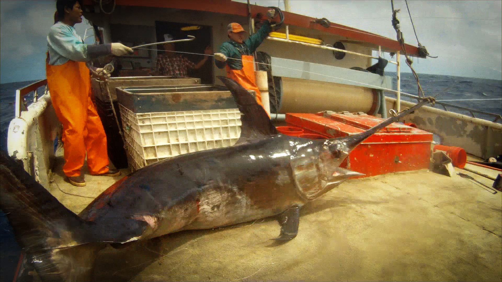 Buy Fresh Hawaiian Swordfish