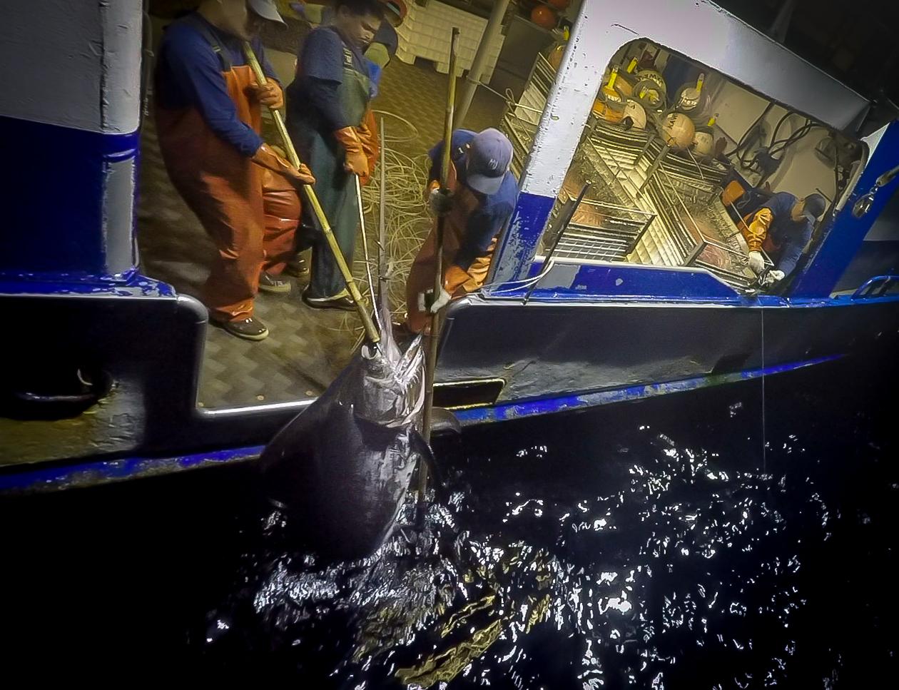 Hawaiian Swordfish