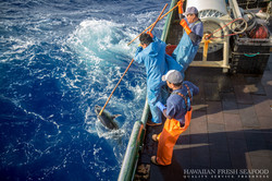 Catching Fresh Hawaiian Ahi
