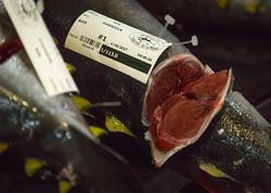 buy Hawaiian Tuna