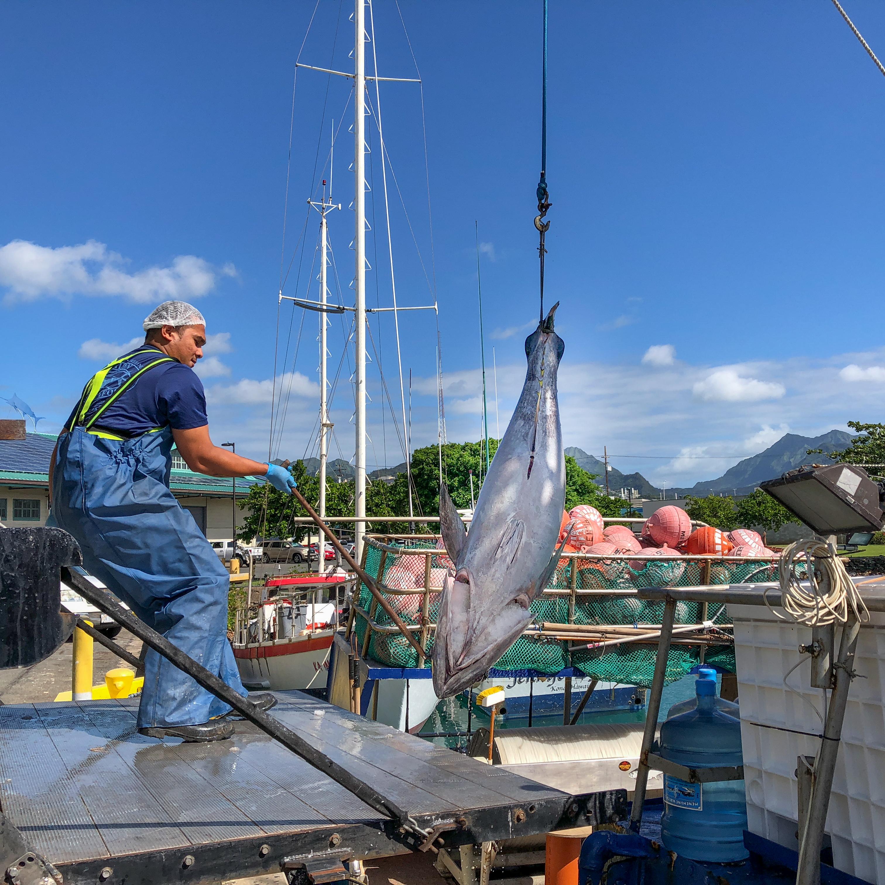 Sashimi grade Hawaiian ahi tuna