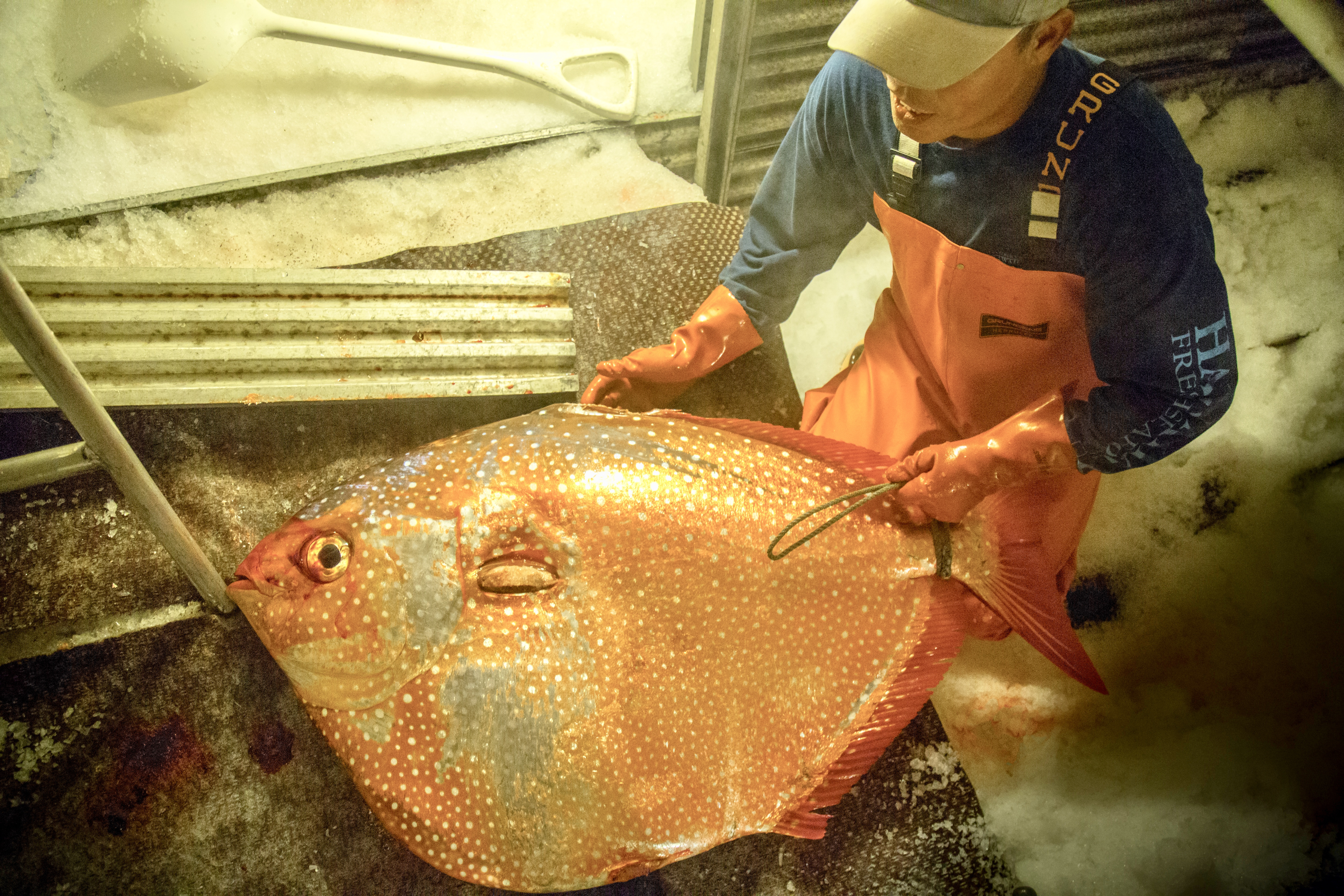 Fresh Hawaiian Opah Moonfish