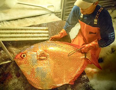 Buy Fresh Hawaiian Opah